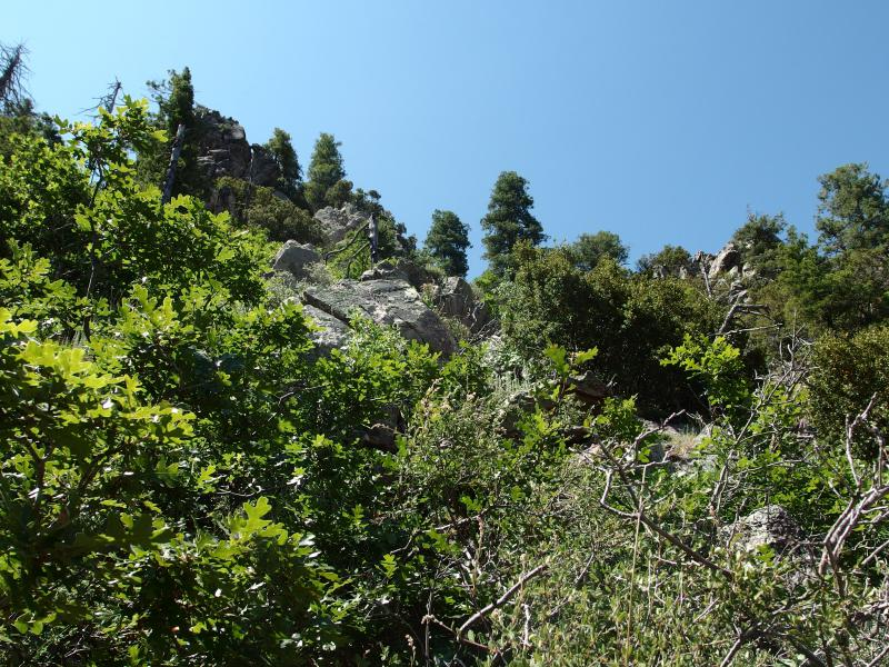 Overgrowth on Amethyst Peak