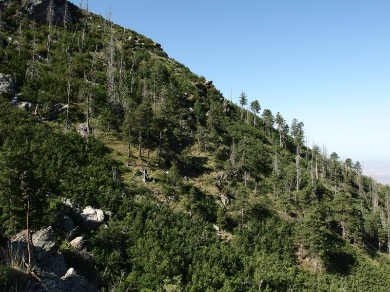 Sparse trees on the slope