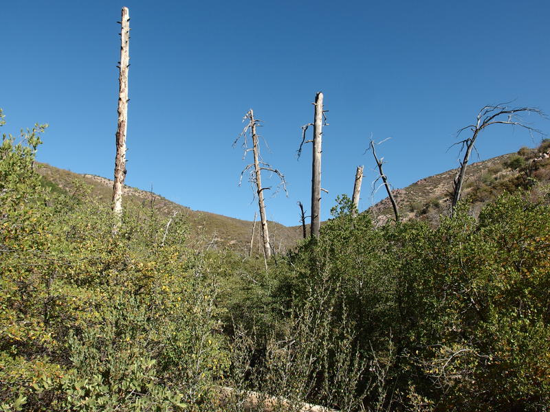 Signs of the Willow Fire of 2004