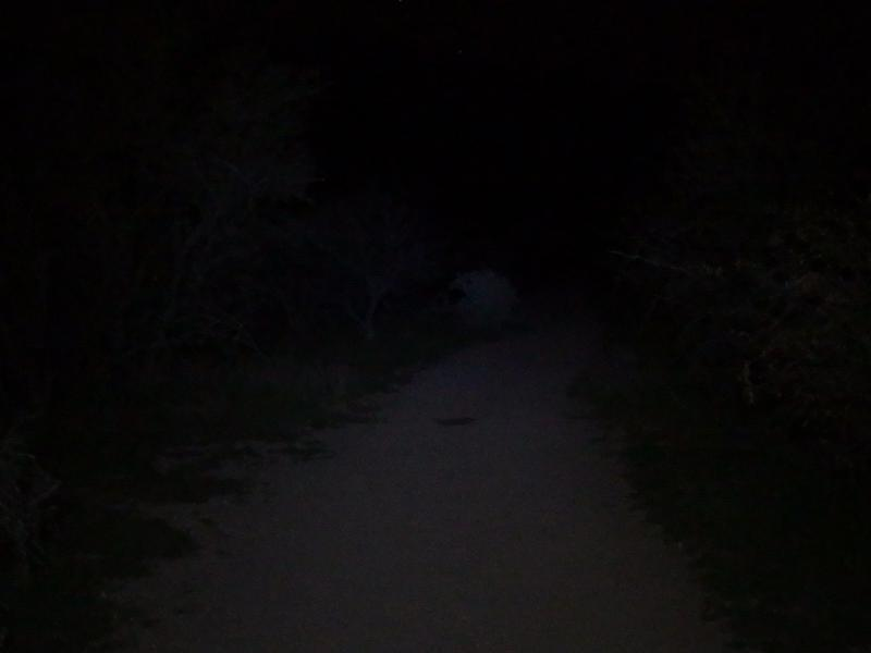 Ghost of a trail through Garden Valley