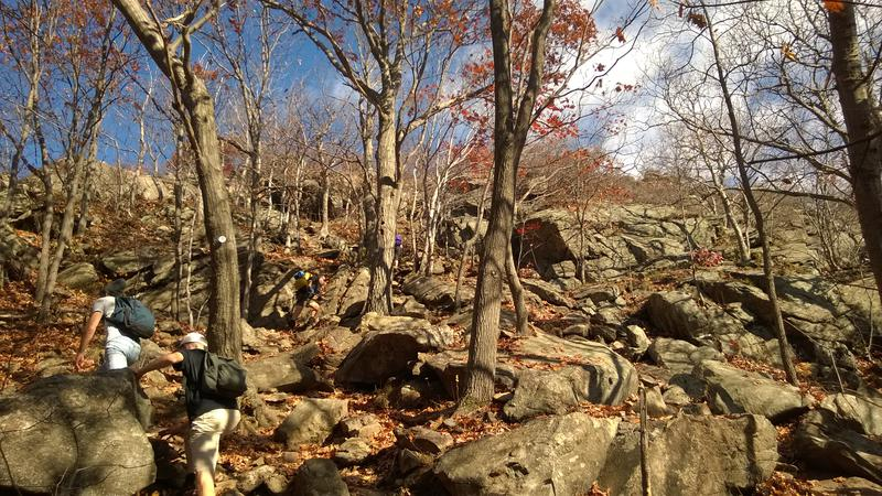 Typical bouldering around fall trees