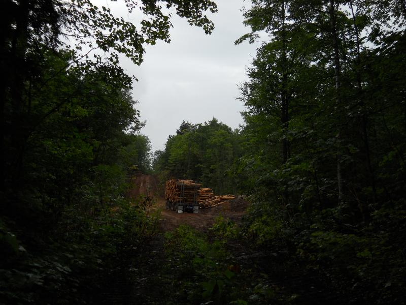 Logging south of Burnt Mountain