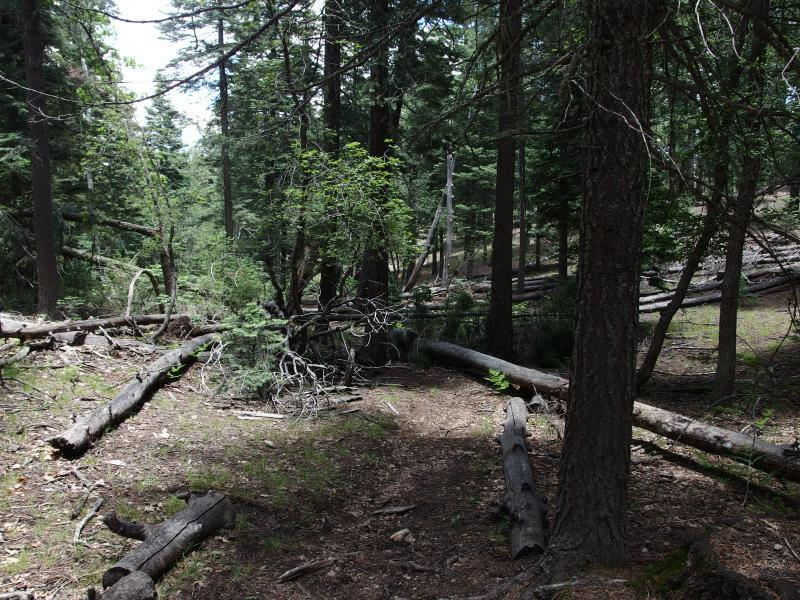 Downed trees backing up the trail