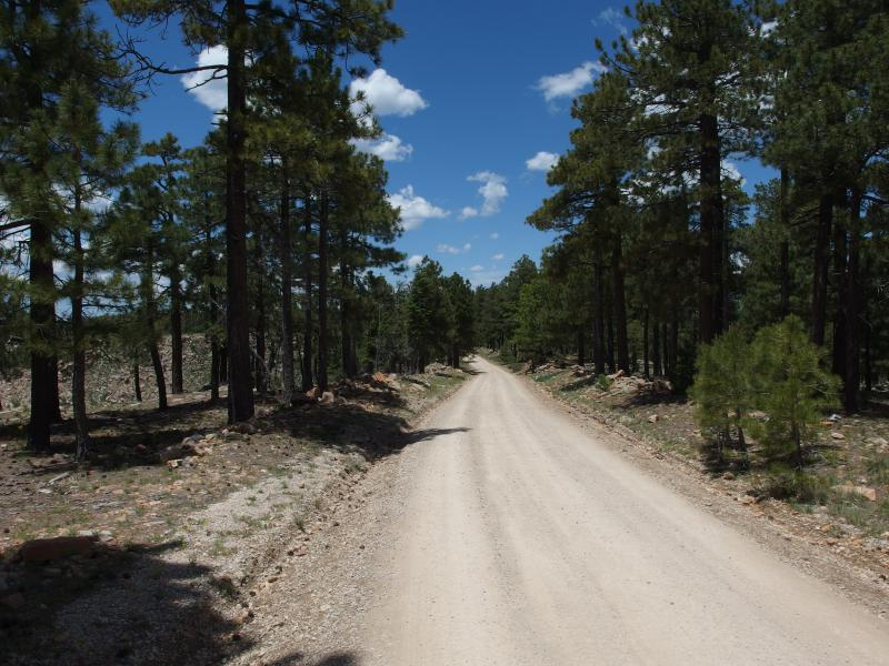 On the dusty Rim Road