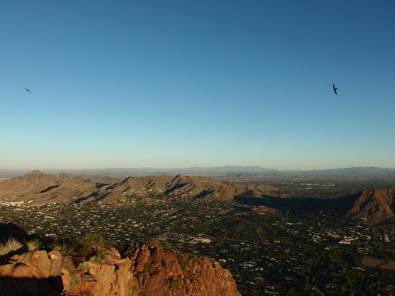 Swallows and the Phoenix Mountain Preserve beyond