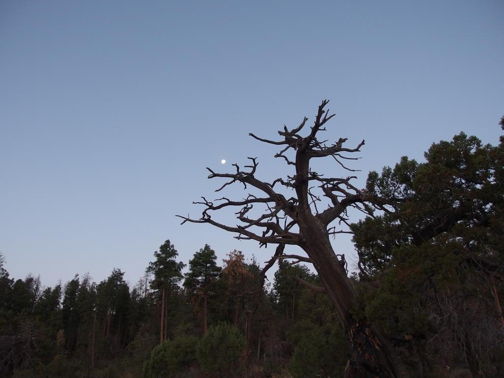 Blog | Rim Trail and Aztec Peak