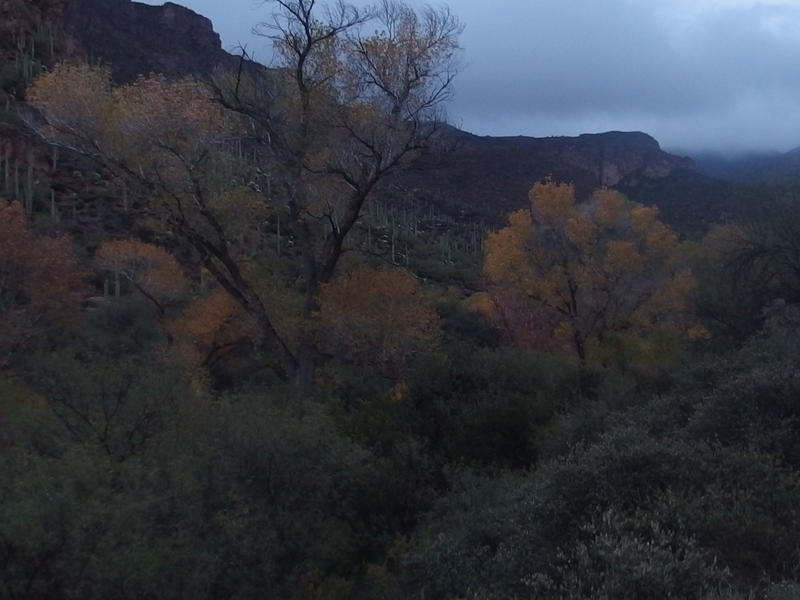 Fall colors within La Barge Canyon