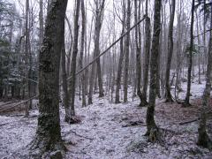 Fresh spring snow in the woods