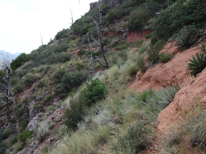 Fantastic section of trail along Midnight Mesa