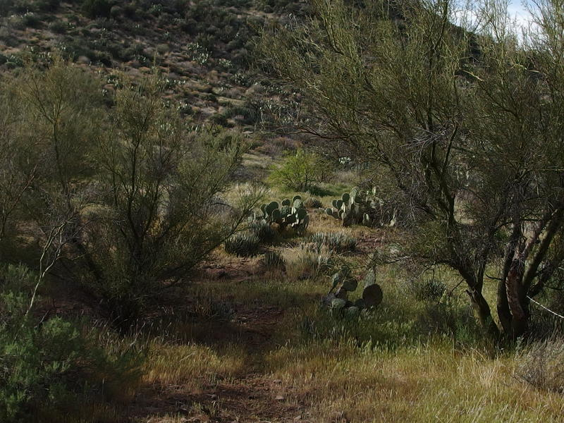 Easy part of the trail between Palo Verde