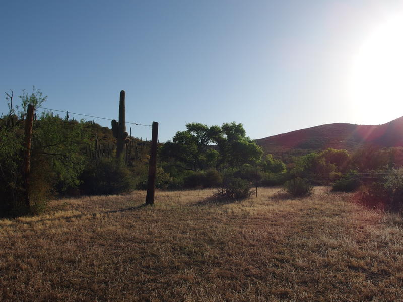 Corral remains at Trail Springs
