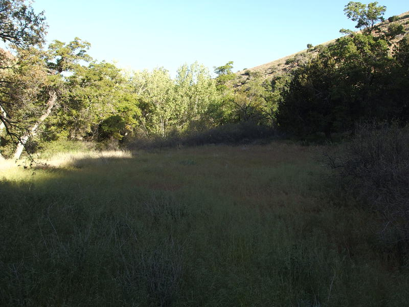 Large, grassy flats along Sheep Creek