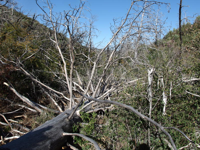 Minor deadfall issues along the trail