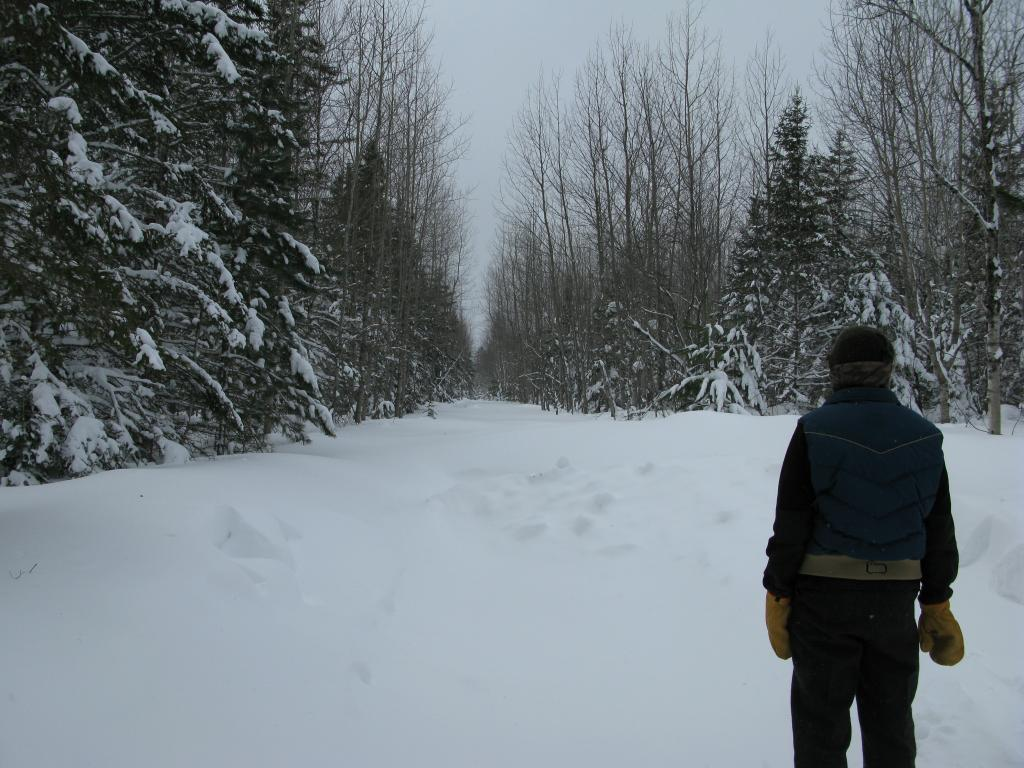 Blog | Courtney Lake Snowshoeing