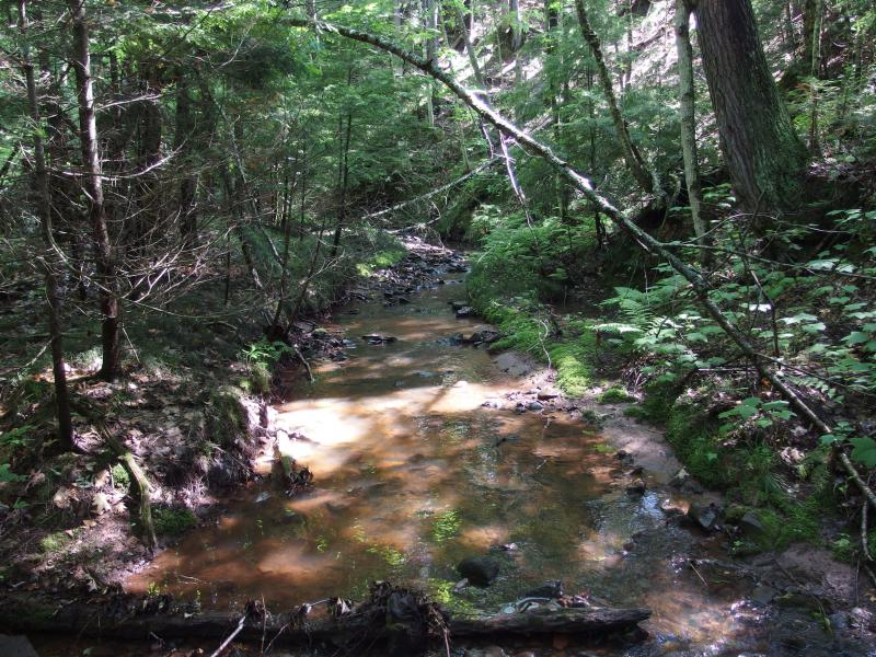 The wide and muddy creek