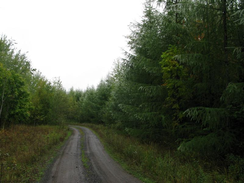 Well-maintained road surrounded by misty trees