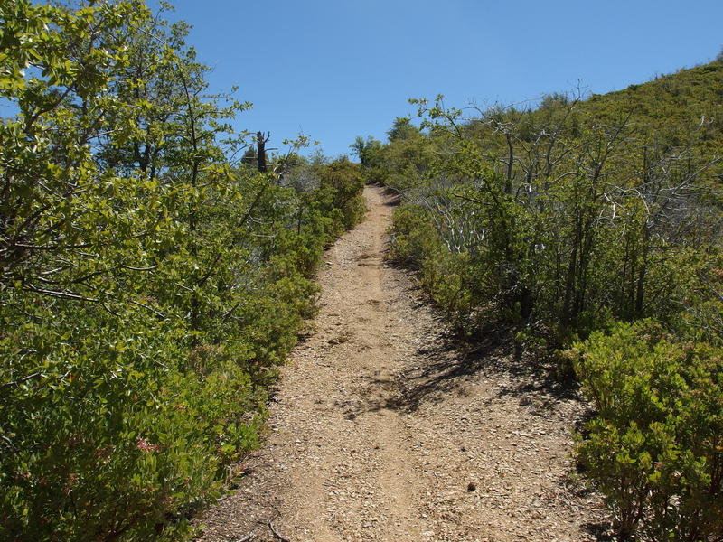 Luxuriously clear trail