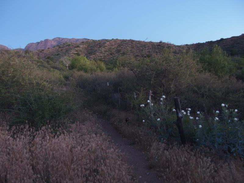 Early morning light along Deer Creek Trail