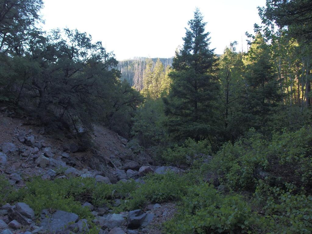 Blog   Deer Creek: Davey Gowan and Gold Ridge