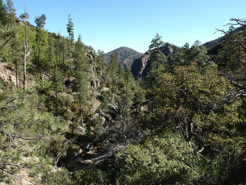Rocky, forested canyon down