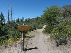 Wide trail leading towards Peeley