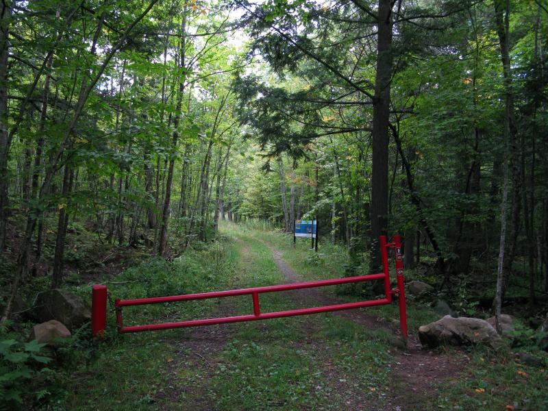 The red gate in the green woods