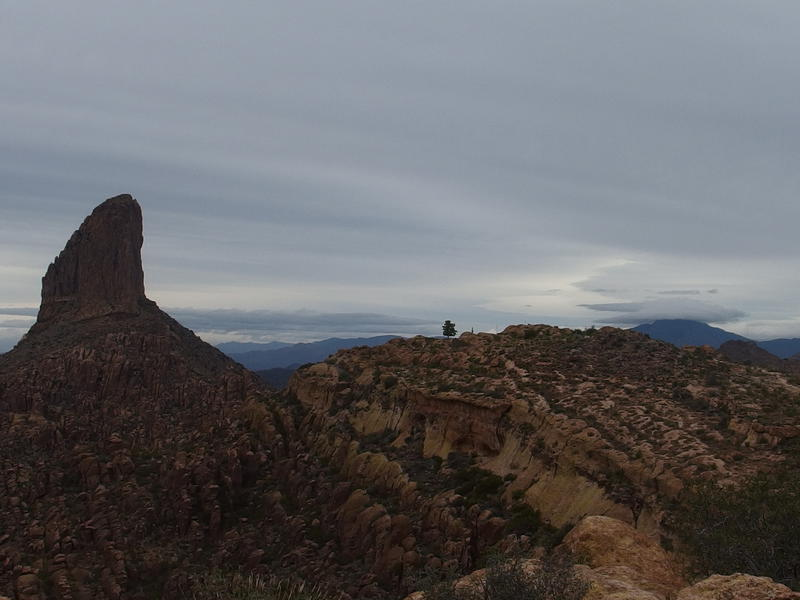 Weaver's Needle, a lonely pine, and the shrouded Four Peaks