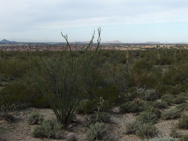 Northern Scottsdale beyond the Ocotillo