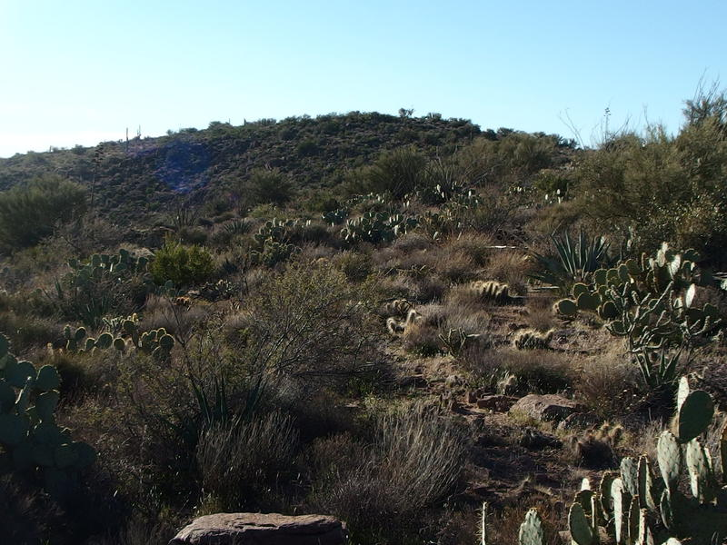 Cactus and brush covering up the route