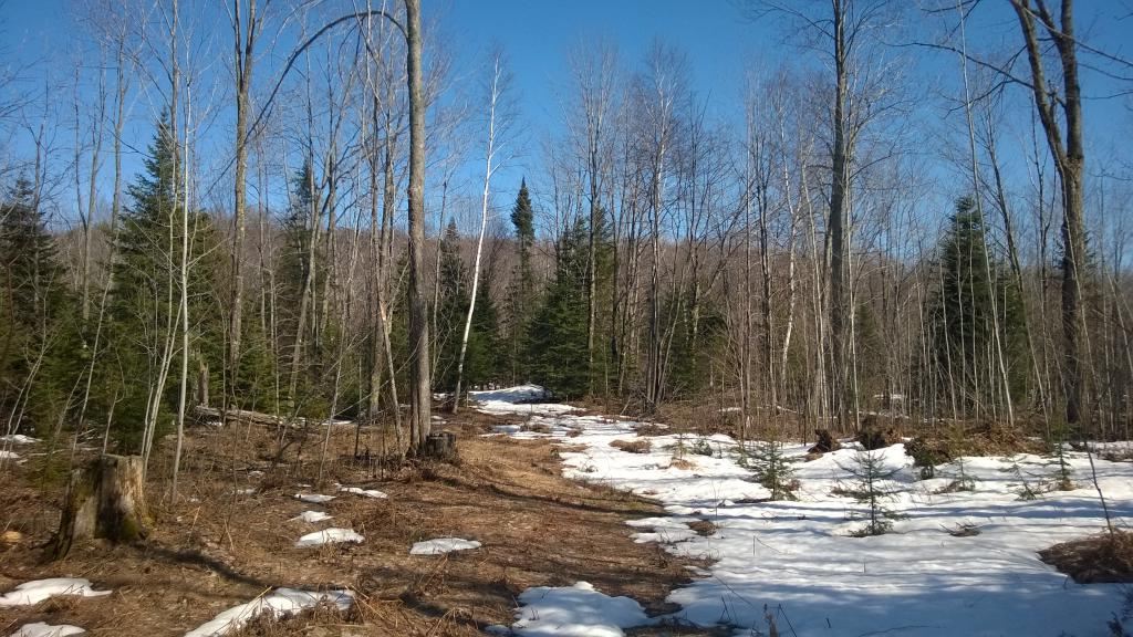 Blog | Gold Mine Hills near Birch Creek