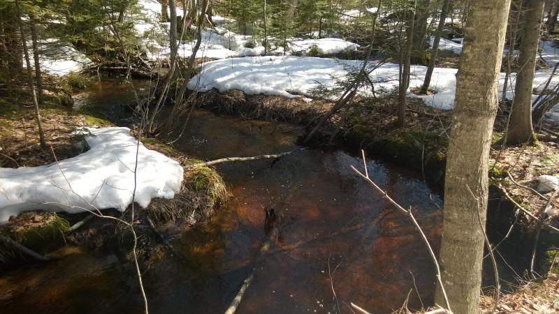 Deep birch creek