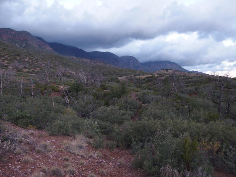Desert scrub and low rises ahead