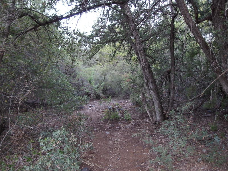 Shaded section of trail along a wash