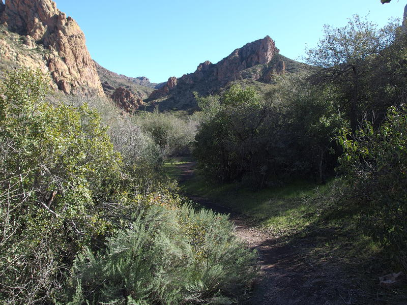 Pleasant hiking surroundings on Terrapin Trail