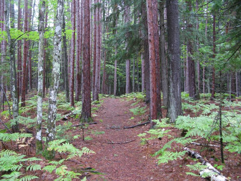 Wide pine trail up Hogsback Mountain