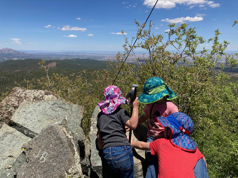 Hunting ladybugs on Spruce Mountain