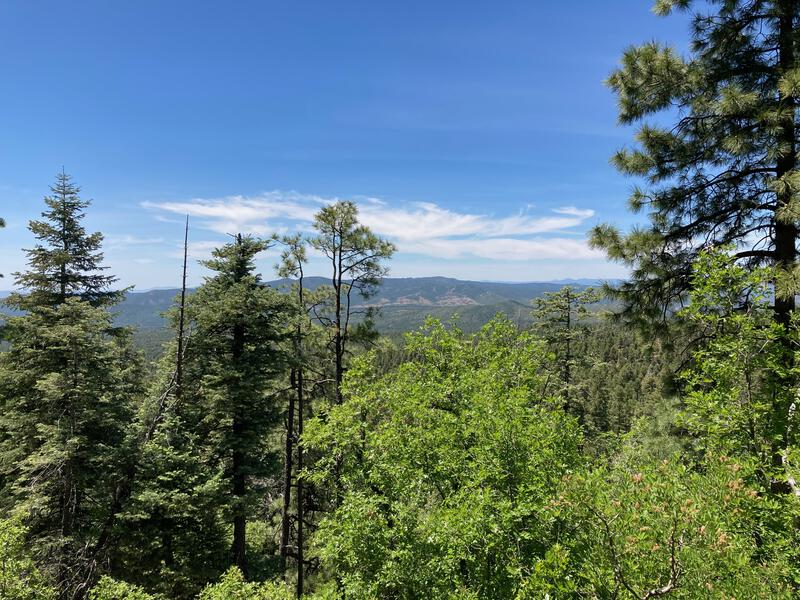 Big views of Prescott forest