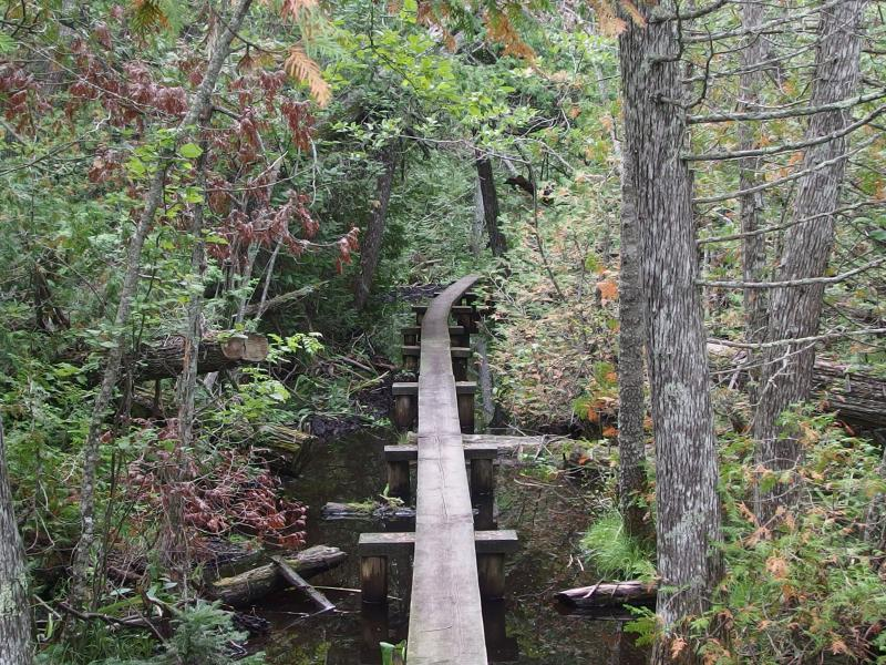 Easy boardwalk over a swampy section