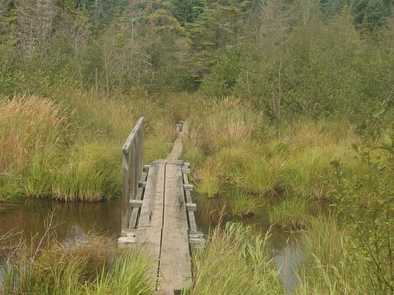 Wooden bridge over Tobin Creek