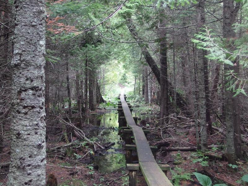 Long boardwalk over a swampy section of trail
