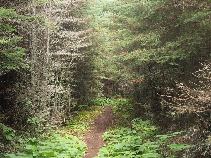Thick woods near the head of Tobin Harbor