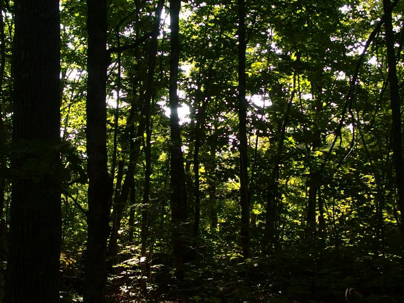 Dappled woods along Red Oak Ridge