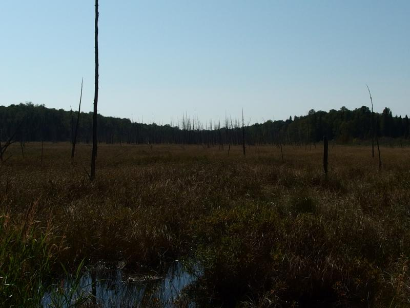 Huge swamp stretching far to the west