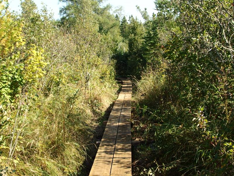 Brand new boardwalk leading a way through the swamp