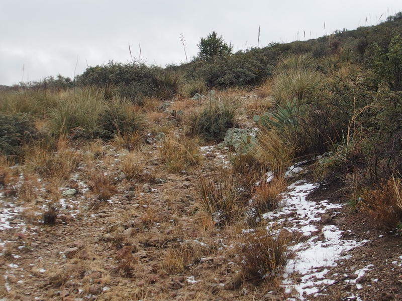Patches of snow along the JF Trail