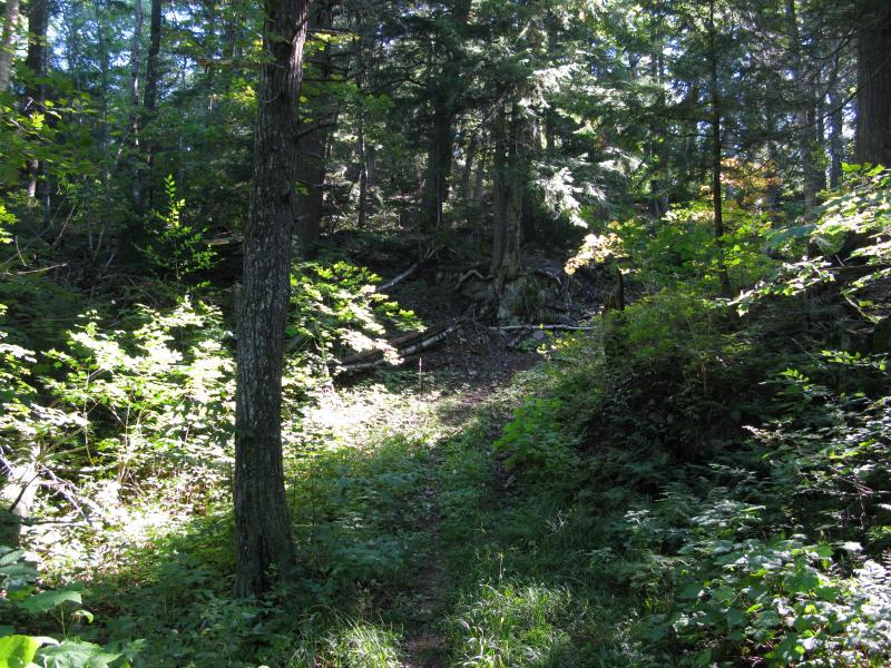 Overgrown path leading around old growth and rocks