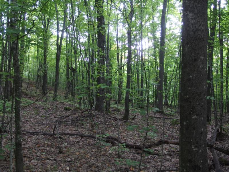 Maturing forest near the top of Limestone
