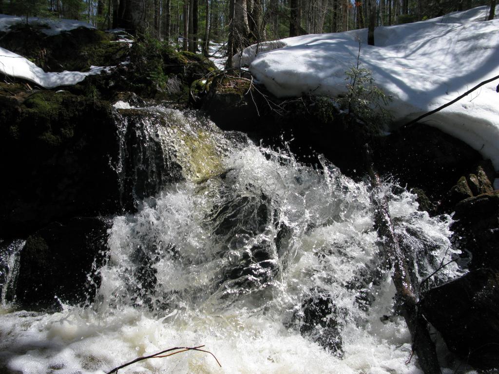 Blog | The Pup Creek Loop