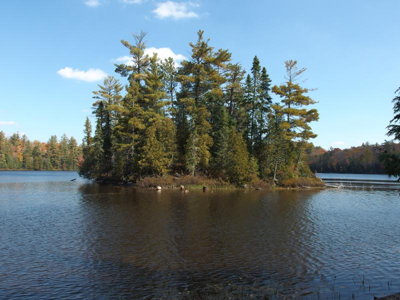 Tall trees on the island of White Deer Lake