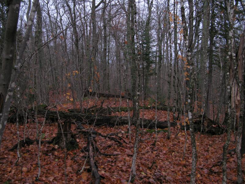 Thick woods along White Deer Lake